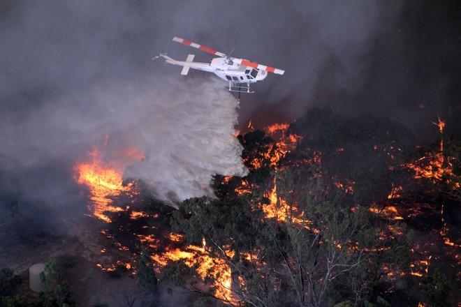 Пожары в Австралии: сколько погибло в огне, карта, реакция знаменитостей