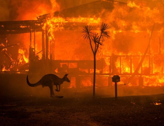 Около 500 млн животных погибло в лесных пожарах Австралии: реакция Елизаветы II, Греты Тунберг, Леонардо Ди Каприо