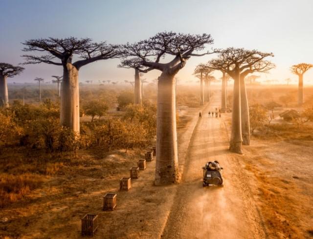 Тест: Что ты знаешь о Мадагаскаре?